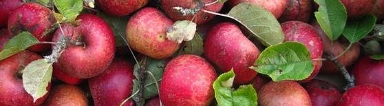Marché fruitier