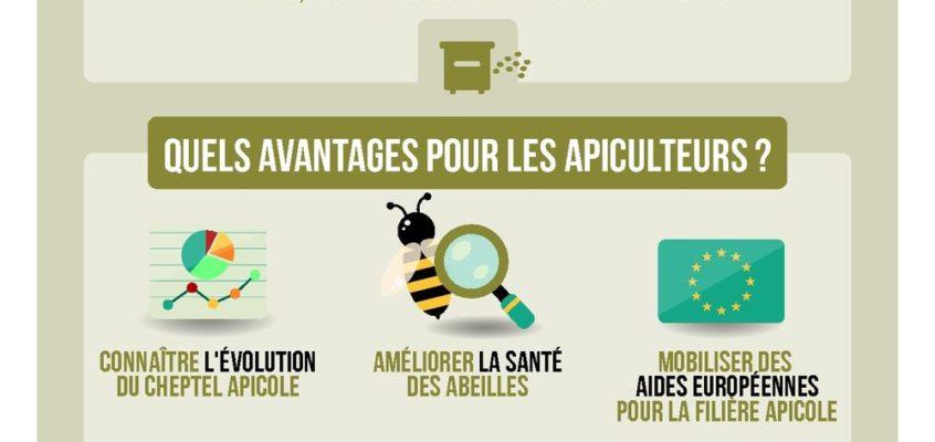 Campagne annuelle de déclaration de ruches